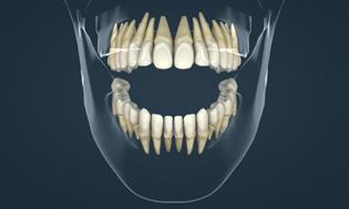 Зубы человека.